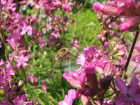 Blüten mit Insekt auf einer Wiese
